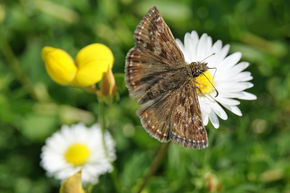 Keep track of butterflies in 2013