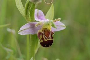 Orchid Surveys